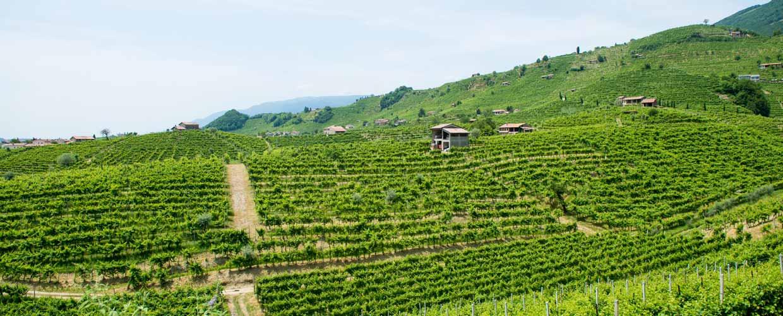 Wine Il Follo Valdobbiadene Italy