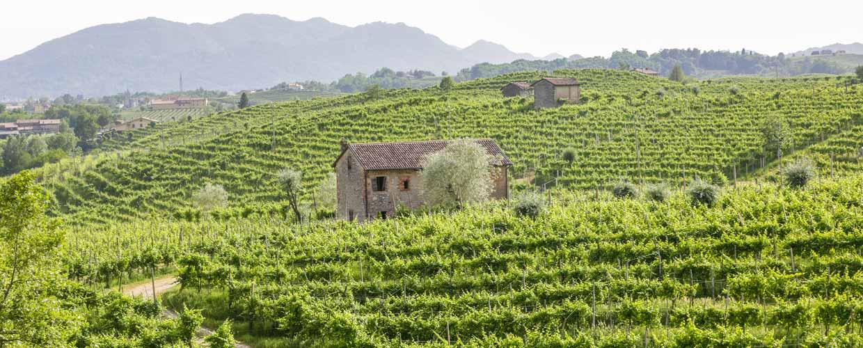 Winery Il Follo Italy